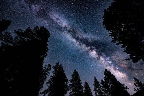 Milky Way over Pine Figures